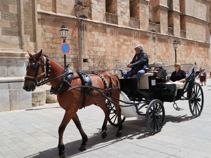 パルマ大聖堂馬車