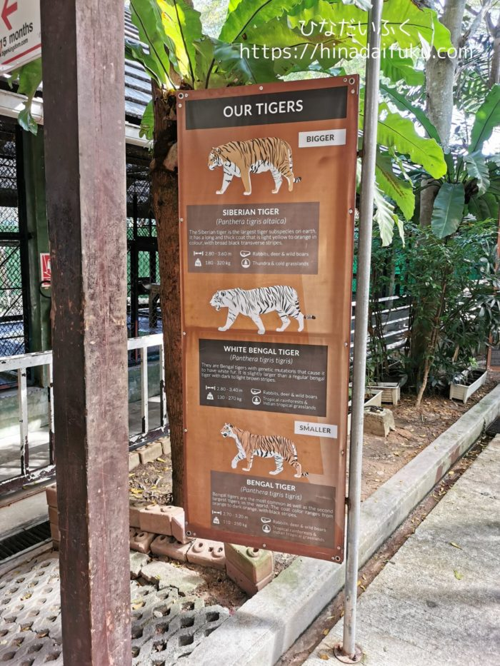 タイガーキングダムのトラ紹介